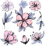Wektorowy wiosny okwitnięcie - różowy kwiatu set Kwiatu i pączka ilustracje royalty ilustracja