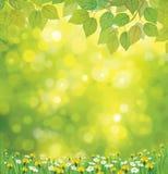 Wektorowy wiosny tło. ilustracja wektor