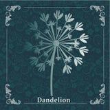 Wektorowy wiosny tło z białymi dandelions Obraz Stock