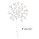 Wektorowy wiosny tło z białymi dandelions Zdjęcia Stock
