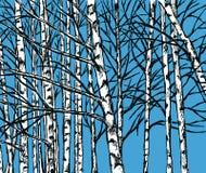 Wektorowy wizerunek brzoza gaj w zimnym sezonie fotografia stock