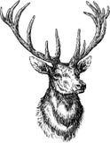 Rogacze royalty ilustracja