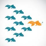 Wektorowy wizerunek goldfish pokazuje lider indywidualności sukces Fotografia Royalty Free