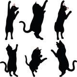 Wektorowy wizerunek - kot sylwetka w zasięg pozie odizolowywającej na białym tle Obrazy Stock