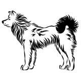 Wektorowy wizerunek psi Akita Obrazy Royalty Free