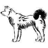 Wektorowy wizerunek psi Akita Zdjęcia Royalty Free