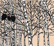 Wektorowy wizerunek sowy w brzoza lesie zdjęcie stock