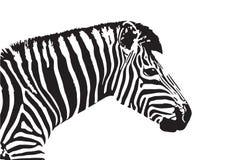 Wektorowy wizerunek zebry głowa ilustracja wektor