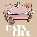 Wektoru 4 koty śpią i bawić się na kanapie royalty ilustracja
