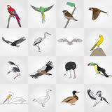 Wektoru kreskowego mieszkania ptaka stylizowany set Obraz Royalty Free