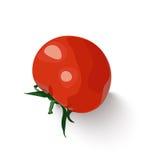 Wektoru odosobniony świeży czerwony pomidor Ilustracji