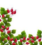 Wektoru różany biodro ilustracja wektor