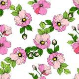 Wektoru Rosa canina Różowy kwiat Grawerująca atrament sztuka Bezszwowy tło wzór Tkanina druku tapetowa tekstura ilustracji