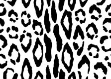 Wektoru wzór z lampart teksturą w czarny i biały kolorach fotografia royalty free
