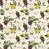Wektoru wzór z ptakiem i owoc Fotografia Royalty Free