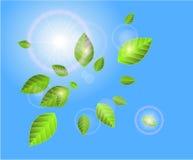 Wektoru zielony natury tło Ilustracji