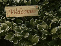 Welcome. Cedar welcome sign among Variegated Solomon's Seal Stock Photo