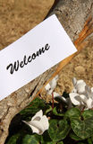 Welcome. Symbol on tree trunk Royalty Free Stock Image