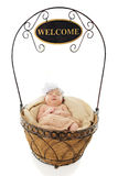 Welcome, Baby! Royalty Free Stock Photo