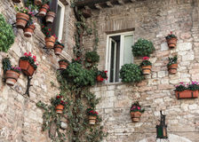 Welcome cyclamens. Outside floral wall that shows the great care in urban decoration of many little villages in Central Italy Royalty Free Stock Photos