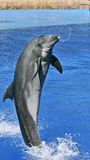 Welcome from dolphin Stock Photo