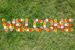Welcome with flowers flower spring meadow grass nature Stock Photo