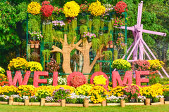 Welcome flowers garden. Colorful Chrysanthemum flower show in many variety and cultivars , red,orange,yellow,white,violet,pink and more royalty free stock images