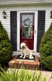 Welcome Home (Front Door w/Dog) Stock Images