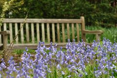 Welcome Respite. Restful, wooden bench surrounded by a field of purple flowers Royalty Free Stock Photos