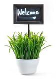 Welcome sign and grass in ceramic pot Royalty Free Stock Photography