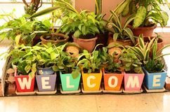 Welcome sign with plants. Welcome sign with ornament plants Stock Image