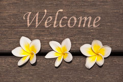 Welcome sign, plumeria flowers Royalty Free Stock Photo