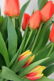 A welcome sign of Spring in fragrant tulips Royalty Free Stock Photo