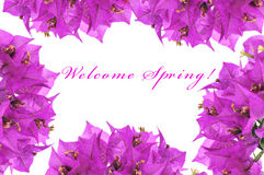 Welcome spring Stock Image