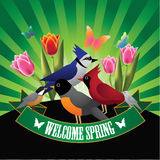 Welcome spring birds and tulips burst design Stock Images