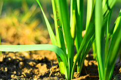 Welcome spring Royalty Free Stock Photos