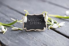 Welcome spring idea, plate with the inscription and snowdrop stock photo