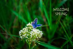 Welcome Spring, text with Beautiful nature scene of green grass Stock Photos