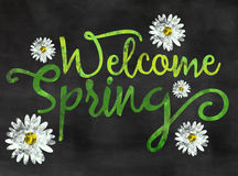 Welcome spring. Words welcome spring written on blackboard / chalkboard with painted blooms Stock Image