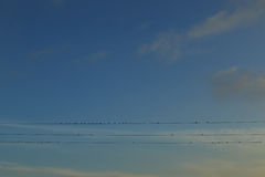 Welcome Swallows Royalty Free Stock Photography
