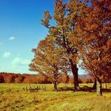 Welcome to autumn season Stock Image