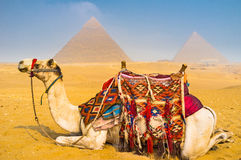 Welcome to Giza Stock Images