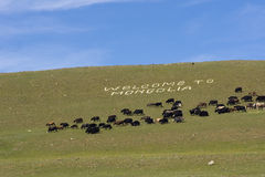 Welcome to Mongolia. Greeting for tourists made with white stones in steppe Stock Photography