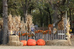 Welcome to the Pumpkin Patch. Entrance to a pumpkin patch with dried corn stalks, giant orange pumpkins, fall colored leaves, hay bales and scare crows, all royalty free stock photos