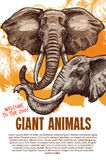 African animals elephants zoo vector poster Royalty Free Stock Photo