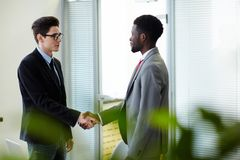 Welcoming business partner. Successful professionals welcoming one another by handshake Royalty Free Stock Photography
