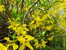 Welkom de lente mooie bloemen in geel en groen Stock Foto