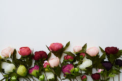 Well-arranged peonies on the white background. A mid shot of gorgeous flowers called peonies lying side-by-side on the simple white field. The image Stock Images