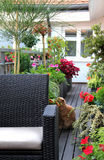 Modern terrace with a lot of flowers and funny cat Royalty Free Stock Images