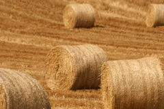 Well done. Harvesting done on time, stubble full of straw Royalty Free Stock Photography